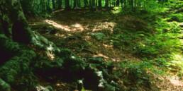 Riserva Riserva Naturale Abetina di Laurenzana Abetina di Laurenzana 1 - Pz