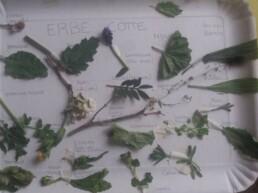 Experience basilicata corso piante