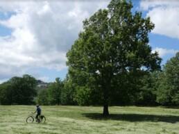 Albero e bici